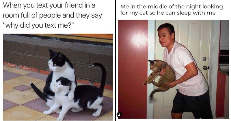 "Funny memes about cats | text friend room full people and they say ""why did text Friend Bae two black and white cats with one covering the others face 