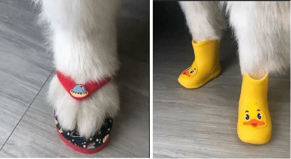 animals wearing shoes | white cat paw wearing a red flip flop spaceship | white fluffy animal wearing yellow duck rain boots
