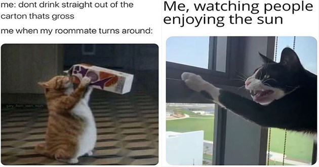 funny cat memes lol cats aww cute animals | dont drink straight out carton thats gross my roommate turns around: gary teen mom | watching people enjoying sun black cat hissing at window