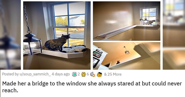 cute animals aww cuteness adorable | Made her a bridge to the window she always stared at but could never reach ledge on wall leading to a window on the opposite side