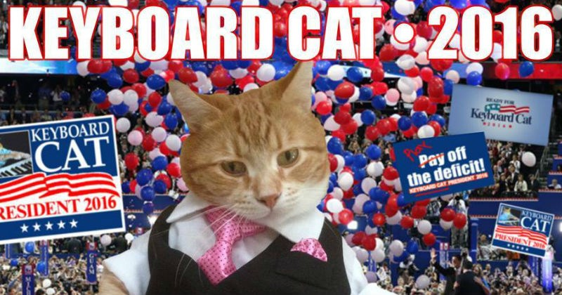 Keyboard Cat president Cats politics - 1120773