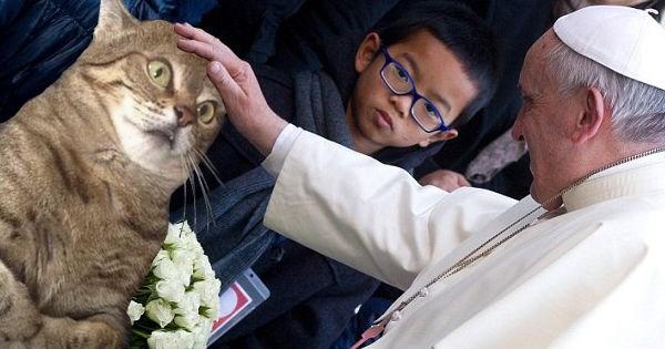 photoshop battle,Cats,perplexed