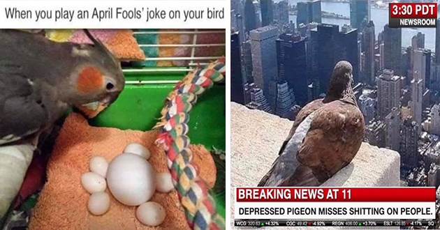 bird birb funny memes meme lol aww cute animals birds | play an April Fools' joke on bird April fools! See More 1.3K 267 Comments Like Comment Share | 3:30 PDT NEWSROOM BREAKING NEWS AT 11 DEPRESSED PIGEON MISSES SHITTING ON PEOPLE. WCG 320.63 +4.32% CGC 49.42 4.92% REGN 406.00 +3.70% ESLT 126.85 4.17% SQ