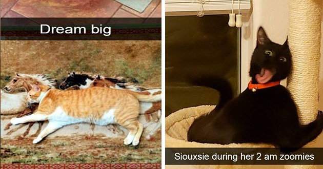 cats snap snapchat cute funny lol animals | Dream big chonky cat lying on its side on a photo of a horse running | Siouxsie during her 2 am zoomies funny black cat on a scratching post