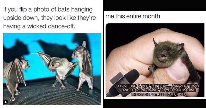 Funny and cute memes about bats   If flip photo bats hanging upside down, they look like they're having wicked dance-off.   bat being interviewed this entire month HAVE HAD VERY LONG DAY.. I AM VERY SMALL AND HAVE NO MONEY SO CAN IMAGINE KIND STRESS I AM UNDER