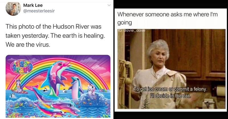 Funny random memes | Mark Lee @meesterleesir This photo Hudson River taken yesterday earth is healing are virus. Lisa Frank rainbow dolphins | Whenever someone asks where l'm going IG davie_dave get ice cream or commit felony. HI decide car. golden girls