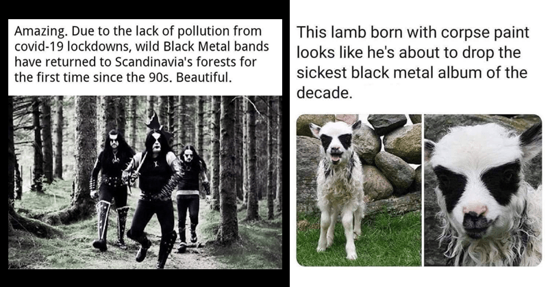 HEAVY METAL MEMES AND TWEETS | Amazing. Due lack pollution covid-19 lockdowns, wild Black Metal bands have returned Scandinavia's forests first time since 90s. Beautiful. | This lamb born with corpse paint looks like he's about drop sickest black metal album decade.