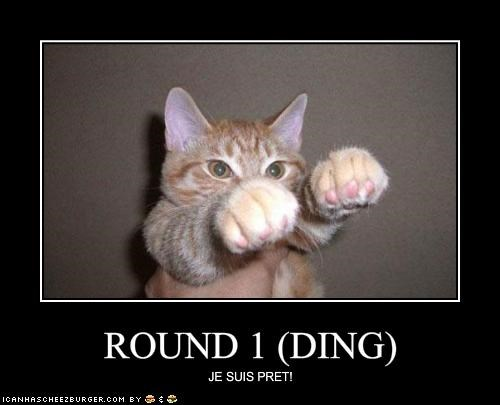 ROUND 1 (DING) - Cheezburger - Funny Memes | Funny Pictures