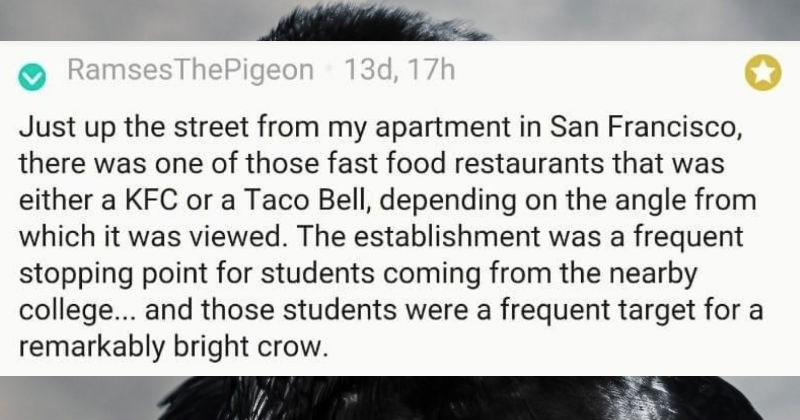 Guy tells a story about a smart crow that got him to buy it a taco | RamsesThePigeon 13d, 17h Just up street my apartment San Francisco, there one those fast food restaurants either KFC or Taco Bell, depending on angle which viewed establishment frequent stopping point students coming nearby college and those students were frequent target remarkably bright crow.