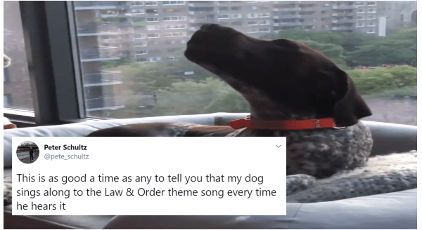 "People Discover Their Pups Are Howling Along With The ""Law & Order"" Theme Song 