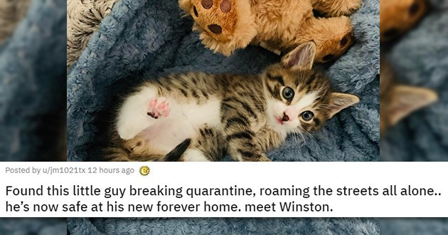 adopt adopted cats dogs rescue animal shelter aww cute | Found this little guy breaking quarantine, roaming the streets all alone.. he's now safe at his new forever home. Meet Winston