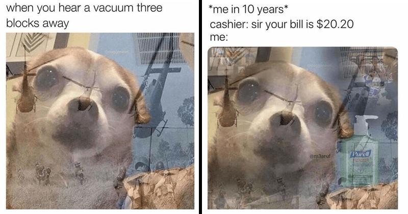 PTSD chihuahua memes, 2020 memes dog flashback | hear vacuum three blocks away Odoggonews | 10 years cashier: sir bill is $20.20 Odognen @m3aruf Purell ADVANCED