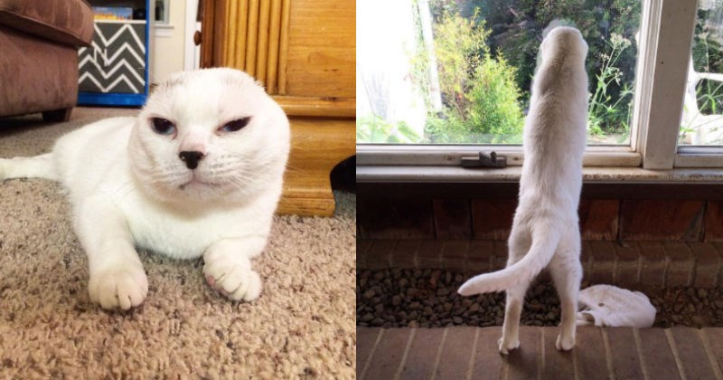 cat with no ears has strong Instagram