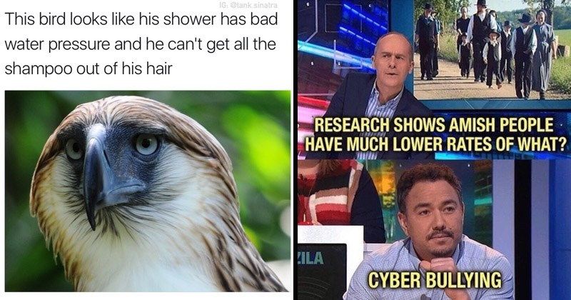 Funny random memes | IG tank.sinatra This bird looks like his shower has bad water pressure and he can't get all shampoo out his hair | RESEARCH SHOWS AMISH PEOPLE HAVE MUCH LOWER RATES URZILA CYBER BULLYING