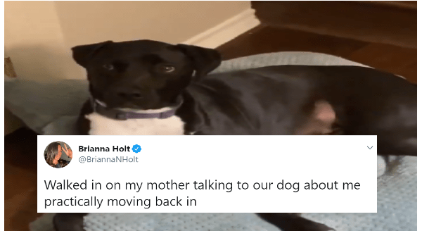 Woman Is Having a Funny Conversation With Her Dog After Her Daughter Moved Back In | tweet by Brianna Holt @BriannaNHolt Walked in on my mother talking to our dog about me practically moving back in