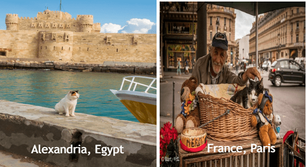 Traveling cats | Alexandria, Egypt cat chilling by a canal in front of an ancient building | Paris, France cat sitting in a wicker basket on a street merchant's table