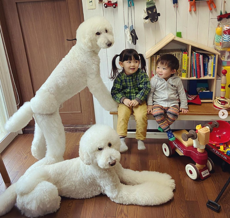 Grandmother Documents The Adorable Adventures Of Her Giant Poodles And Grandchildren | cute photo of two young children sitting in a room filled with toys next to two fluffy white poodle dogs