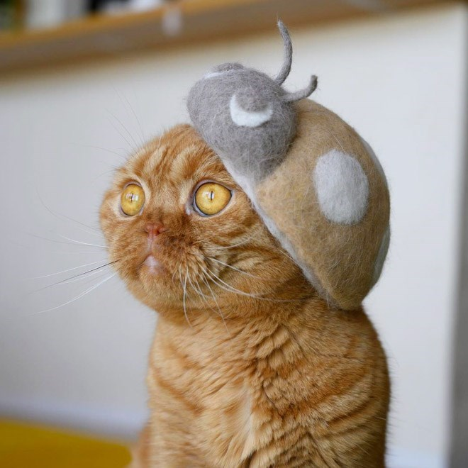 Japanese Artist Is Back With a New Collection Of Cat Hats Made From Their Own Fur   cute orange cat with yellow eyes wearing a soft ladybird shaped hat and a hat shaped like the smiling poop emoji