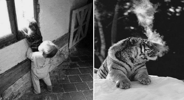 Amazing animal photos | cool black and white photography baby holding a cat up so it can look out a window | tiger in the snow with a cloud of steam rising from its mouth