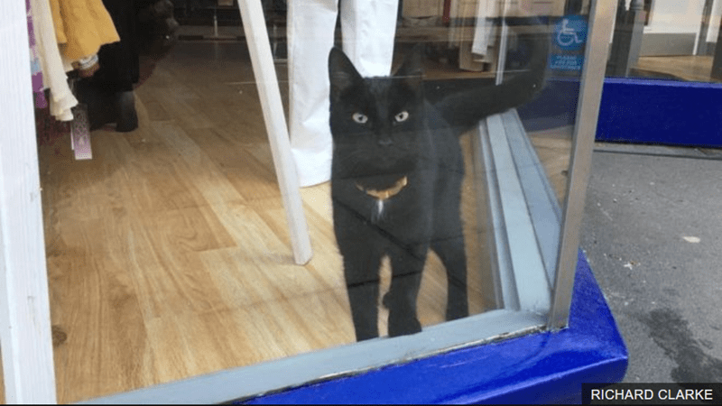 Missing Cat Was Spotted By His Owners Two Weeks Later In a Window Of a Closed Shop | black cat wearing a collar looking outside through a glass window