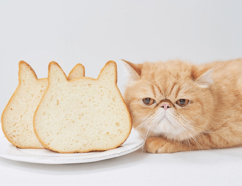 Japanese Bakery Offers Cat-Shaped Bread | cute adorable orange cat posing sitting beside slices of bread that are shaped like cat heads with ears