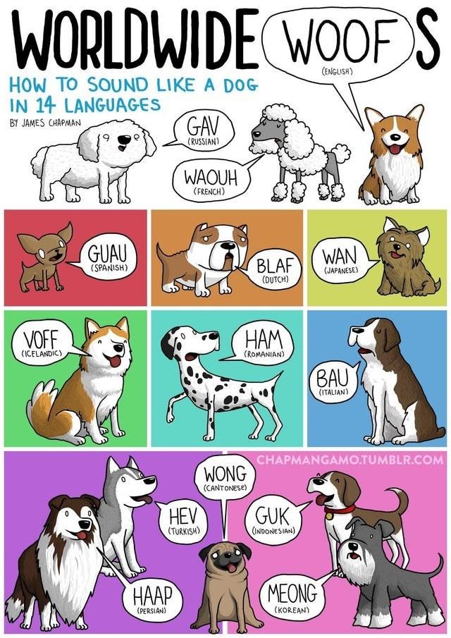 top ten daily infographics guides | Animal - WORLDWIDE WOOF S (ENGLISH SOUND LIKE DOG 14 LANGUAGES GAV BY JAMES CHAPMAN (RUSSIAN) WAOUH (FRENCH) GUAU (SPANISH) BLAF (DUTCH) WAN (JAPANÉSE) VOFF HAM (ROMANIAN ICELANDIC) BAU (ITALIAN) CHAPMANGAMO.TUMBLR.COM WONG (CANTONESE) HEV GUK (INDONESIAN TURKISH MEONG (PERSIAN KOREAN)