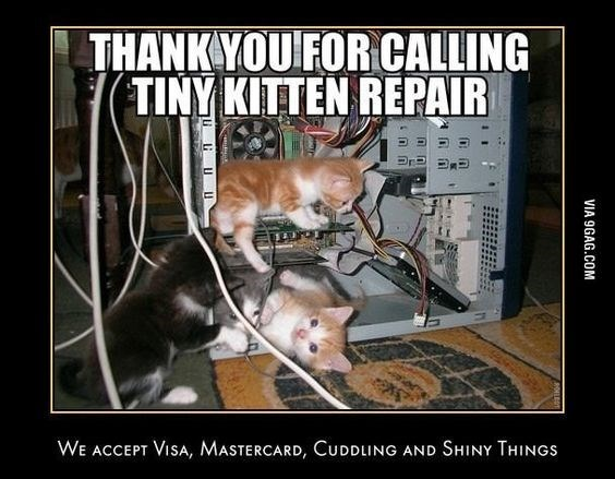 Technician Cats Who Are Busy Making An Update To The PC | THANK CALLING TINY KITTEN REPAIR ACCEPT VISA, MASTERCARD, CUDDLING AND SHINY THINGS VIA 9GAG.COM three tiny kittens playing inside a computer