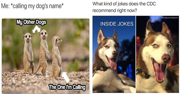 doggo dog memes funny lol aww cute animals | three meerkats standing calling my dog's name My Other Dogs One Calling | husky dog kind jokes does CDC recommend right now redgroverredgrover INSIDE JOKES