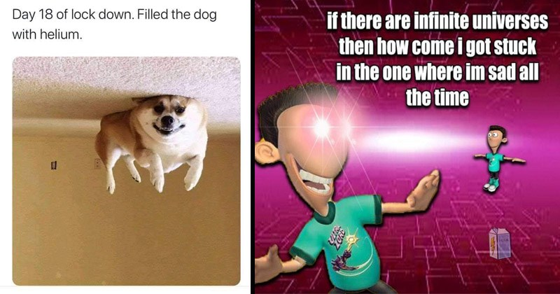 Funny random memes and weird pictures | cluedont @cluedont Day 18 lock down. Filled dog with helium. | if there are infinite universes then come got stuck one where im sad all time MILK