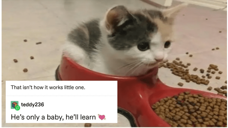 Funny tumblr posts about baby animals | isn't works little one. teddy236 He's only baby, he'll learn tiny kitten sitting in a red water bowl near its food