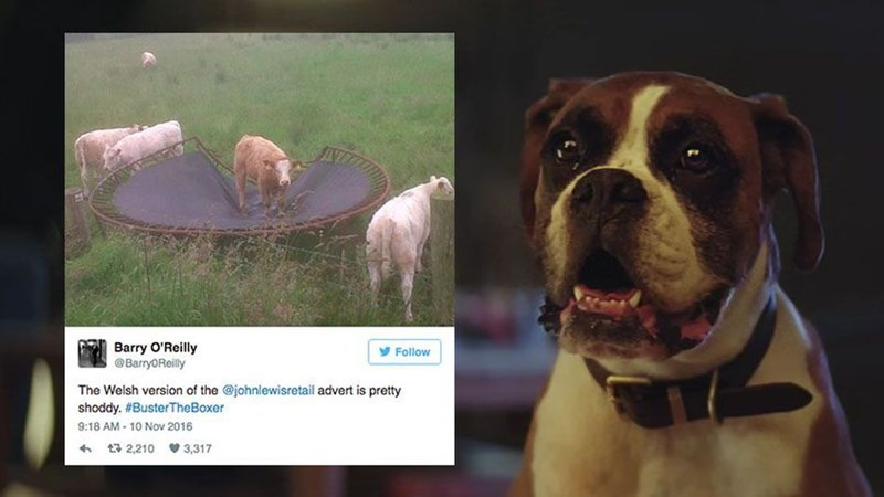 christmas john lewis dogs twitter reactions funny - 1131781