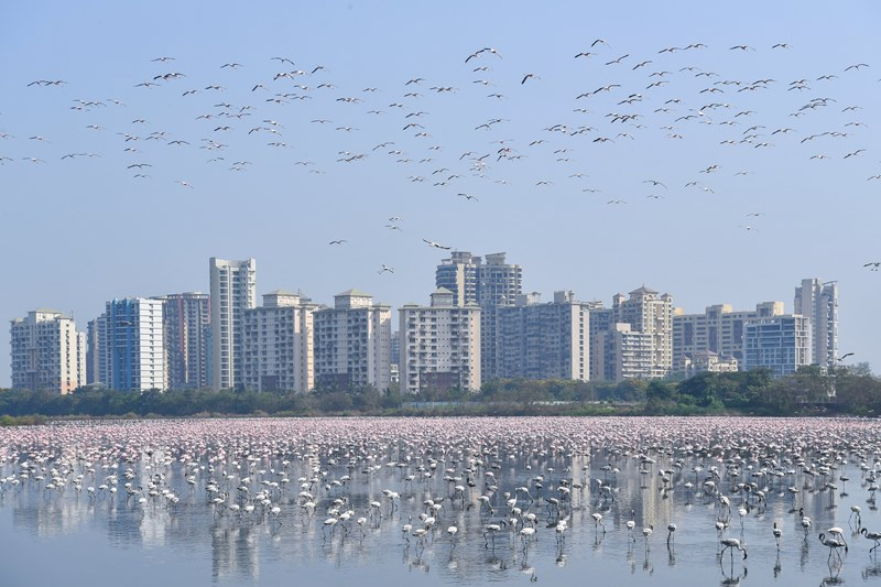 Thousand of Flamingos Have Taken Over Mumbai | photo of the sky above a city swarmed with flying birds and a lake filled with many flamingos