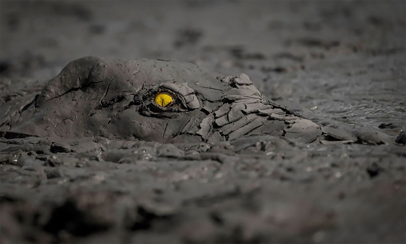 Stunning Winning Photos From The GDT's Nature Photographer Of The Year 2020 | yellow eye of a crocodile peeking out from the dried cracked covering the rest of its body
