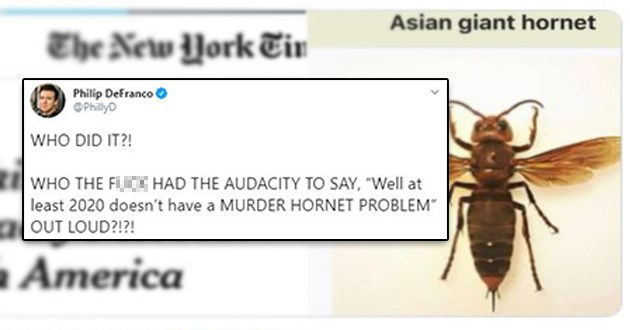 "murder hornets tweets thread wtf asian giant | Philip DeFranco @PhillyD WHO DID WHO FUCK HAD AUDACITY SAY Well at least 2020 doesn't have MURDER HORNET PROBLEM"" OUT LOUD Asian giant hornet New York Tin king Murder adly Pest Has Re h America 8:17 PM May 2, 2020 Twitter iPhone 3.5K Retweets 21.5K Likes"