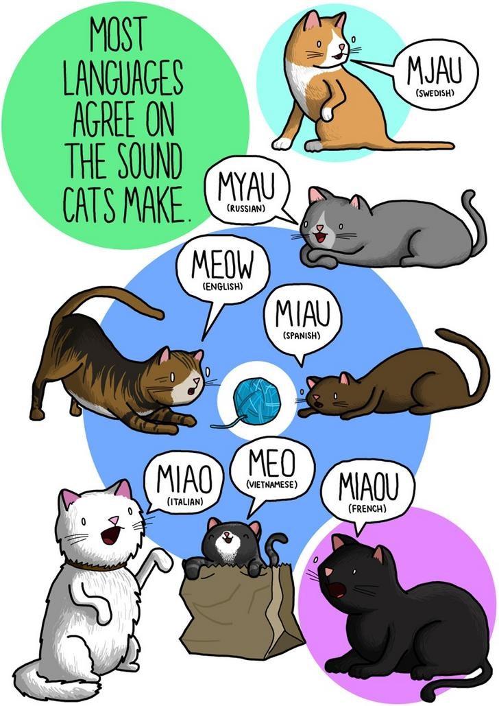 animals sounds art cool languages world interesting | cartoon illustration MOST LANGUAGES MJAU (SWEDISH) AGREE ON SOUND MYAU CATS MAKE (RUSSIAN) MEOW (ENGLISH) MIAU (SPANISH) MIAO MEO MIAOU (VIETNAMESE ITALIAN FRENCH) WORLDWIDE WOOF S (ENGLISH SOUND LIKE DOG 14 LANGUAGES GAV BY JAMES CHAPMAN (RUSSIAN) WAOUH (FRENCH) GUAU WAN BLAF (SPANISH JAPANESE DUTCH) VOFF ICELANDIC ROMANIAN) BAU (ITALIAN) CHAPMANGAMO.TUMBLR.COM WONG (CANTONESE) HEV GUK (TURKISH INDONESIAN MEONG (PERSIAN KOREAN)