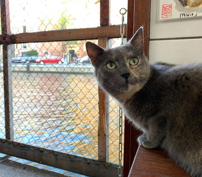 cats cat boat amsterdam floating sanctuary animals cool amazing | grey cat sitting indoors inside a boat cabin near a window facing a canal showing water