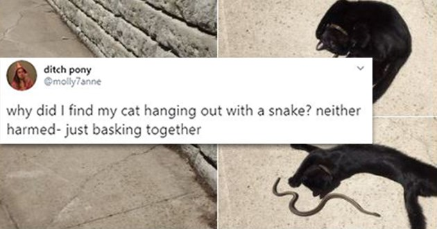 cats snake friendship tweets weird cool animals lol twitter | ditch pony @molly7anne why did find my cat hanging out with snake? neither harmed- just basking together 10:17 PM Apr 30, 2020 Twitter iPhone 100K Retweets 597.7K Likes black cat chilling in the street with a snake