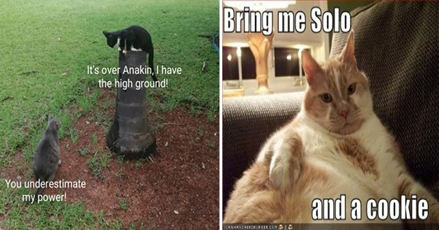 star wars may fourth force 4th animals cats aww cute memes funny lol | 's over Anakin have high ground underestimate my power! cat standing on top of a pole looking down at a cat on the ground | Bring Solo and cookie ICHNHASCHEEZBURGER COM S