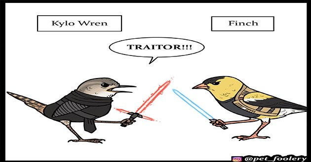 star wars birds comic funny punny puns cute art comics aww may the 4th | Kylo Wren Finch TRAITOR O @pet_foolery illustration drawing of two small birds fighting with light sabers