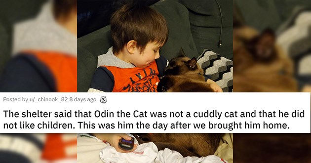 cats good boy girl animals cat aww cute | The shelter said that Odin the Cat was not a cuddly cat and that he did not like children. This was him the day after we brought him home adorable cat cuddled up with a child