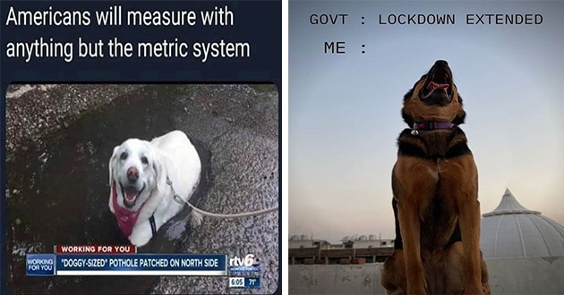 "doggo dogs funny memes lol cute aww animals | Americans will measure with anything but metric system WORKING DOGGY-SIZED"" POTHOLE PATCHED ON NORTH SIDE rtv6 WORKING 6:05 71 