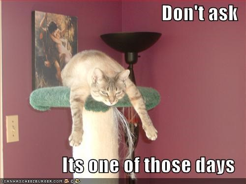 Don T Ask Its One Of Those Days Cheezburger Funny Memes Funny Pictures