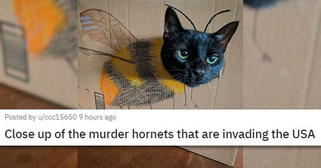 cats rescue funny cute cat kittens sad mourning love animals aww | Close up of the murder hornets that are invading the USA black cat sticking its head through a hole in a cardboard with a drawing of a bee's body on it