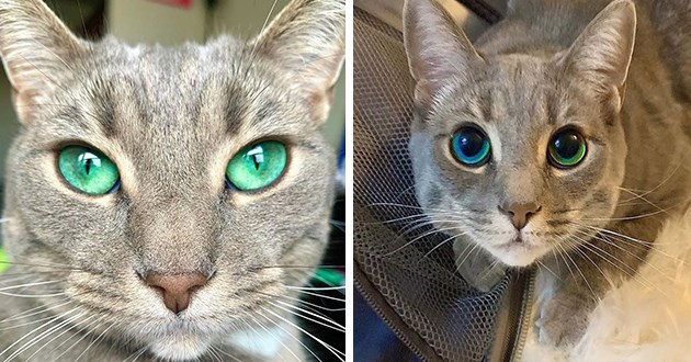 cats green eyes instagram animals beautiful | grey cat with stunning emerald green turquoise eyes pinprick pupils and dilated