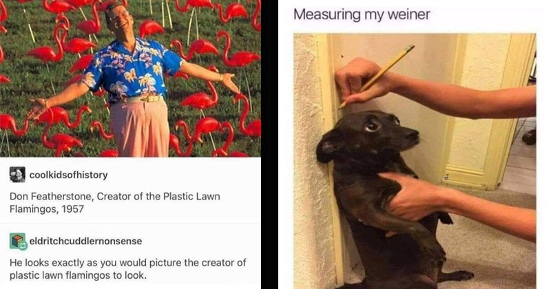 Funny random memes   coolkidsofhistory Don Featherstone, Creator Plastic Lawn Flamingos, 1957 eldritchcuddlernonsense He looks exactly as would picture creator plastic lawn flamingos look.   Measuring my weiner dog