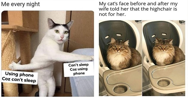 cats caturday funny memes lol aww cute animals cat | cat with its front legs crossed and clawing at two different things every night Can't sleep Coz using phone Using phone Coz can't sleep | My cat's face before and after my wife told her highchair is not her.