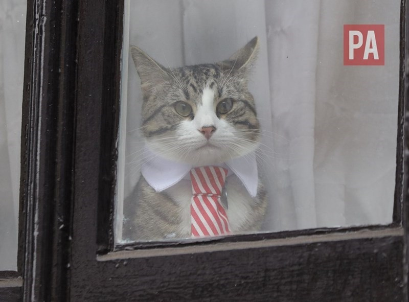 tie julian assange Cats window