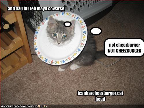 Cheezburger Image 1137350912