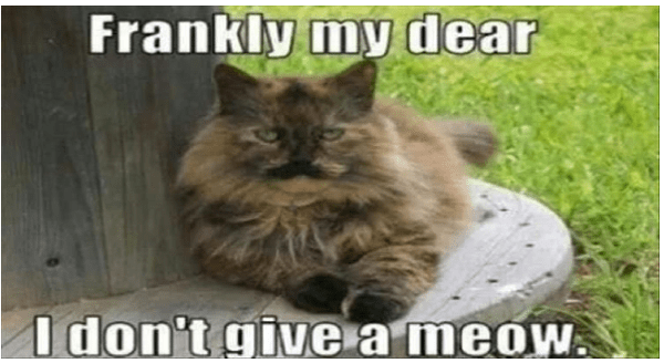 Fresh animal memes | Frankly my dear don't give meow. cute funny cat with long fur and markings under its nose that look like a mustache like Clark Gable in Gone with the Wind