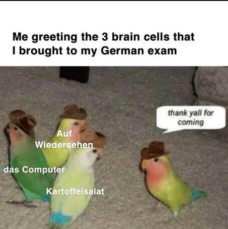 top ten 10 dank memes daily | parrots birds cowboy hats greeting 3 brain cells brought my German exam thank yall coming Auf Wiedersehen das Computer Kartoffelsalat